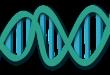בדיקות גנטיות – מדריך
