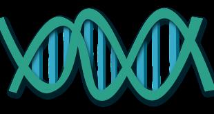 בדיקות גנטיות בהריון